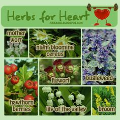#Herbs for the #Heart |||| #health #herbal