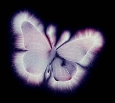 Butterfly's Energy Field    Kirlian Photography    OfLoveEnergyPractitioner.blogspot.com