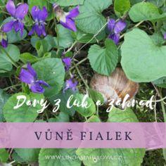 "Linda Mahelová | Bylinky, ""Provoněný den"" Herbs, Garden, Plants, Food, Garten, Lawn And Garden, Essen, Herb, Gardens"