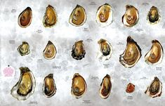 The oyster world seems overwhelming, but there are only five species of oysters in the world, and it's easy to tell one from another. Here's how.