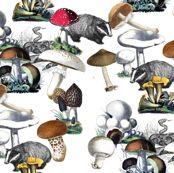 Badger Badger Mushroom by annacole