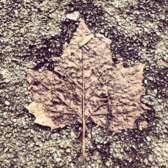 Wet high contrast leaf