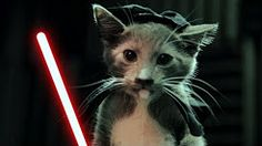 cat vines star wars - YouTubeTap the link to check out great cat products we have for your little feline friend!
