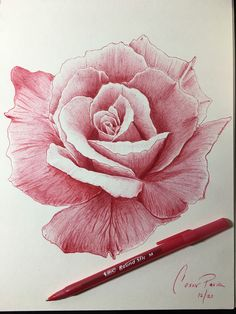 Pencil Sketches Easy, Art Drawings Sketches Simple, Rose Drawings, Realistic Drawings, Drawing Ideas, Rose Sketch, Pen Sketch, Ballpen Drawing, Biro Drawing