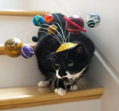 A must have cat hat! Cats Are Center of the Universe/ Solar System Cat Fascinator/ Planetary Kitty Hat Silly Cats, Crazy Cats, I Love Cats, Cats And Kittens, Cute Cats, Funny Cats, Funny Animals, Cute Animals, Cats In Hats