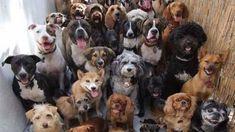 Petition · Ministério Público de Peruíbe-SP: Zoonoses de Peruíbe em estado de…