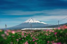 The Story of the Bullet Train in Japan - Trazee Travel 1964 Olympics, High Speed Rail, Osaka, Mount Rainier, Bullet, Tokyo, Destinations, Train, Japan