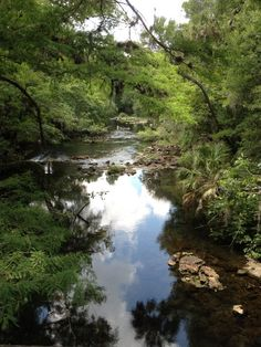 Hillsborough River State Park.  One of our favorite places to spend a Saturday Afternoon.