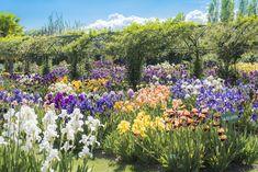 Le jardin de Doreen explose de couleurs durant le mois de mai. Non Stop, Days Out, The Row, Sculptures, Castle, Plants, Irises, Mai, 6 Months