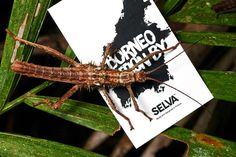 Borneo collection made by Selva