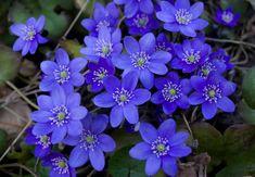 Hej! Nu får du lägga upp en bild på blomman jag ger dig. Hitta en bild och lägg upp på facebook plus följande meddelande : Min avsikt är att fylla facebook med blommor för att bryta mättnad av alla negativa bilder och videor. Om du gillar inlägget kommer jag välja en blomma till dig.