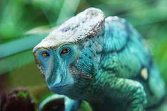 Proboscis monkey-chameleon hybrid
