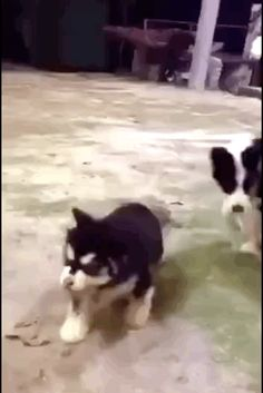 Don't eat me! Funny puppy gif