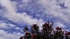 Desde las Islas Canarias  ..Fotografias  : Contemplando el jardín y las Nubes en Maspalomas G...