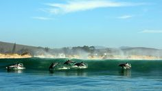 Amazing moment caught on camera: Dolphins playing in the waves on the coast of South Africa #wildlife #ocean #kilroy