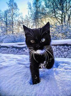 Image via We Heart It https://weheartit.com/entry/155085895/via/21128430 #cat #snow #winter
