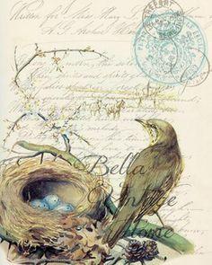 Botanical Bird with Nest Print, Pillow, Note Cards, Tea Towel