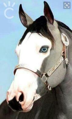I love horses with blue eyes!!!!
