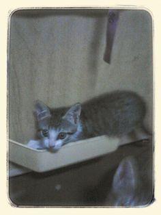Me espiona... Esta na gaveta da minha maquina de costura