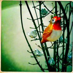 Parrot, Bird, How To Make, Animals, Parrot Bird, Animales, Animaux, Birds, Animal