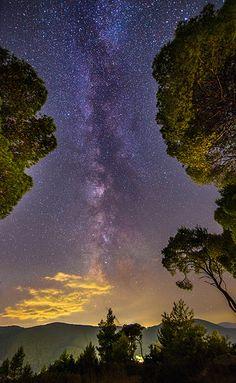 Milky Way among the trees | par Vagelis Pikoulas