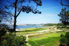 ARCO  #pontedarrabida #porto #gaia #vilanovadegaia #riodouro #douro  #afurada #green #blue #nature #architecture #trees #spring #vsco #vscocam #like4like #a6000 #sigma60mm by goncalopl