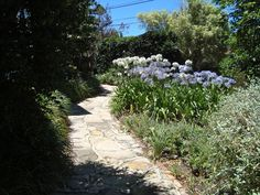 Front garden with sandstone flagstone path