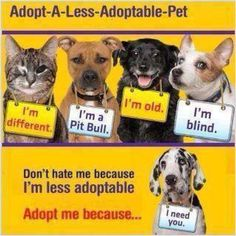 Adopt a less-adoptable pet.