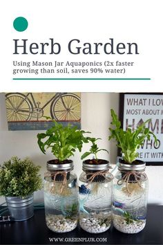 nice 3 Mason Jar Aquaponics Kit - Organic, Sustainable, Fish Hydroponics Herb Garden (WITHOUT JARS)