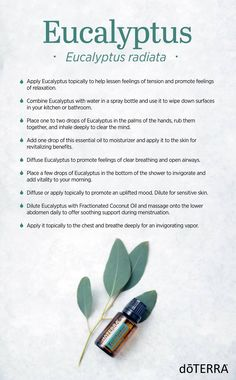 Eucalyptus is an amazing essential oil with great benefits! You can use it for cleaning, relaxing, and so much more. How will you use Eucalyptus oil today?