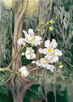 Margareth Mee - A Dama Das Orquídeas