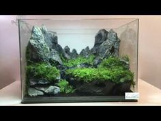 Aquascaping réalisation - Laurent Garcia - Aquarilis - YouTube