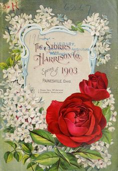 Painesville Nurseries :  Spring 1903 Seed Catalogue  - Storrs and Harrison Co.