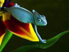 Chamäleons: Die Reptilien sind Fans von Klettertouren – Bild: Shutterstock / Sebastian Dud    www.einfachtierisch.de