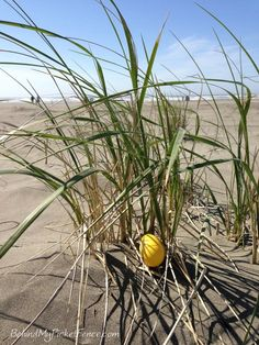 {easter on the beach} spent easter on the washington coast ~ easter egg hunt was so much fun...and sandy. happy easter to all!