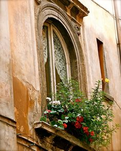 Italy Photography - Roman Window  Italian Architecture Flowers Lace Curtains Large Classic Home Decor Art Print