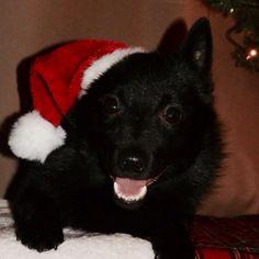 Guinness all ready for Santa