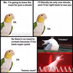 5 Things That May Surprise You About Parrots Parrot Logo, Parrot Fish, Parrot Cartoon, Funny Birds, Cute Birds, Parrot Quotes, Kakapo Parrot, Parrot Image, Parrot Craft