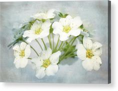 White Wonders Acrylic Print by Larysa Koryakina. Available in many sizes and in Acrylic, Metal, Canvas, Framed, Wood and Standard Print. Also as a Greeting Card. Photography Art design for Office and Home Decor.