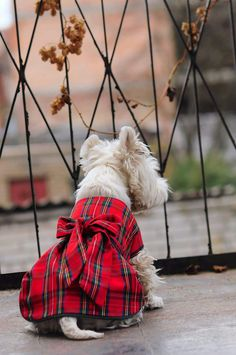 Tweed dog coat dress, cap and bow set, Scottish coat, westie tartan parade dress and bow, tartan day Highlands Terrier, West Highland Terrier, Tweed, West Highland White, White Terrier, Dog Dresses, Dog Coats, Tartan Plaid, Westies