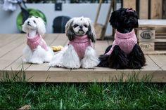 cute puppies :)