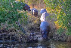 Zimbabwe-Zambesi river | por venturidonatella