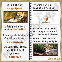 Fiche pour enfant du guépard