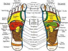 Nos pieds possèdent 7200 terminaisons nerveuses qui correspondent chacune d'elle à un organe ou une glande. un point douloureux correspond à un dysfonctionnement qui est lui-même souvent lié à un p…