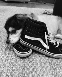 Duke is so cute😍😍😍 Calum Thomas Hood, Calum Hood, Cutest Dog On Earth, Vans Converse, Harry Styles, 5sos Pictures, 5sos Memes, 1d And 5sos, 5 Seconds Of Summer