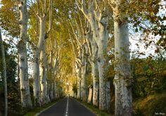 sur la route de Sauvian-Sérignan - BEZIERS - Hérault ( France ). Par Reda CHER.
