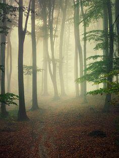 Misty | Flickr - Photo Sharing!