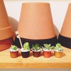 DaHorta: Succulents in Nespresso's capsules Hobbies And Crafts, Diy And Crafts, Mini Vasos, Diy Cans, Aesthetic Coffee, Growing Succulents, Cactus Y Suculentas, Plantar, Plantation