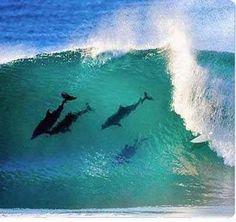 Surfing con delfines :)