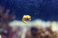 Baby sea horse